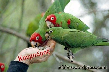 parrots_and_gossip