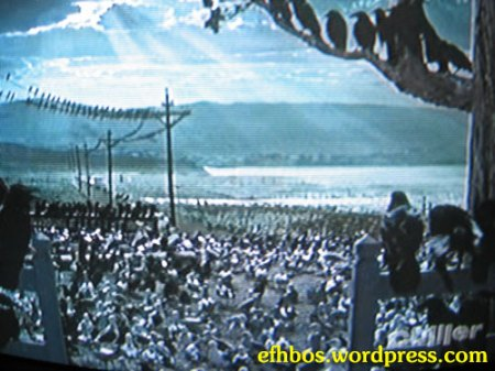 the_birds-3